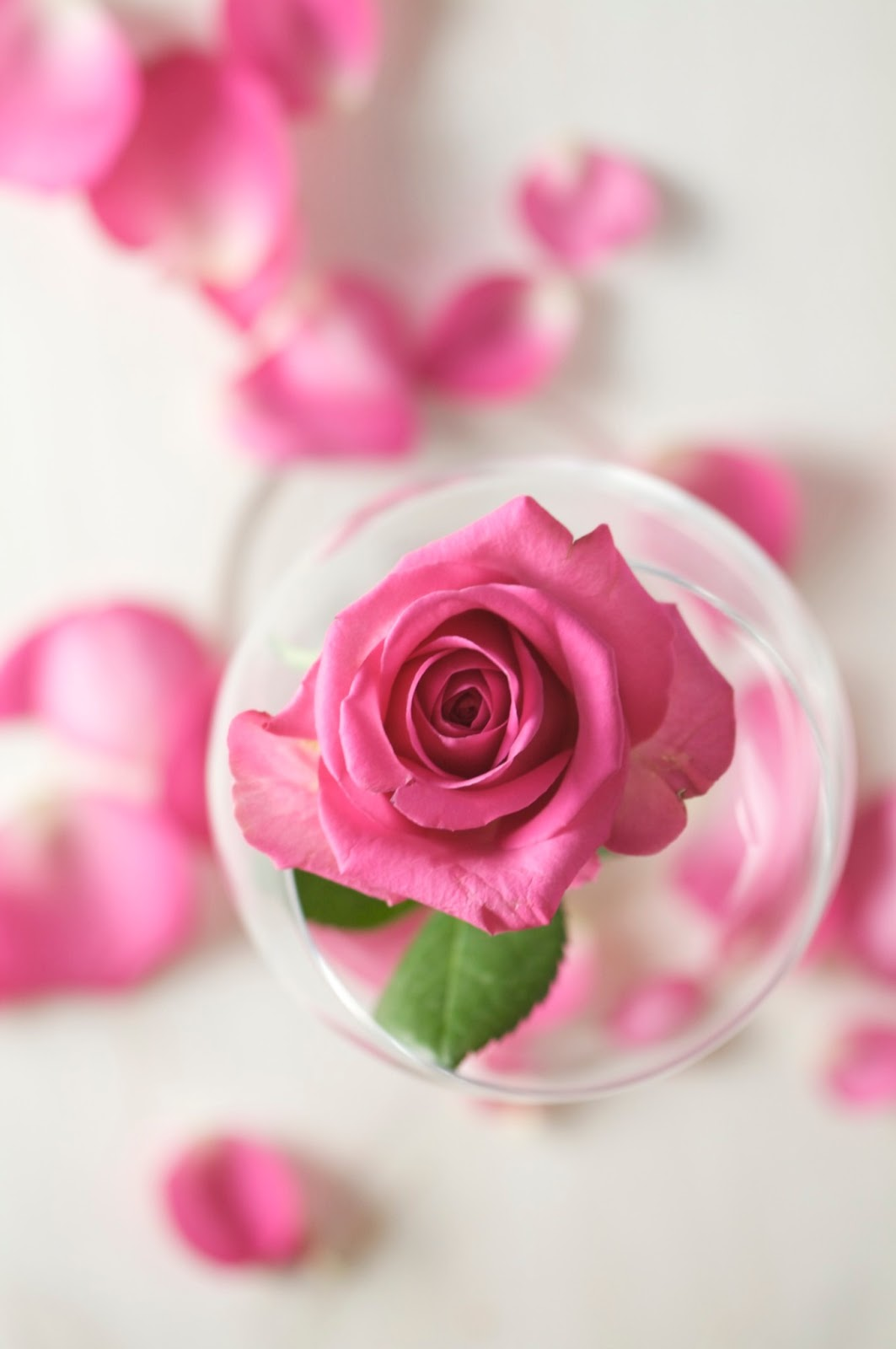 How To Make Your Own Rose Water To Refresh Your Skin- httpusefuldiyprojects.com(3)