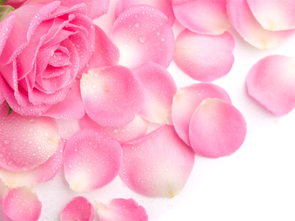 How To Make Your Own Rose Water To Refresh Your Skin- httpusefuldiyprojects.com(4)