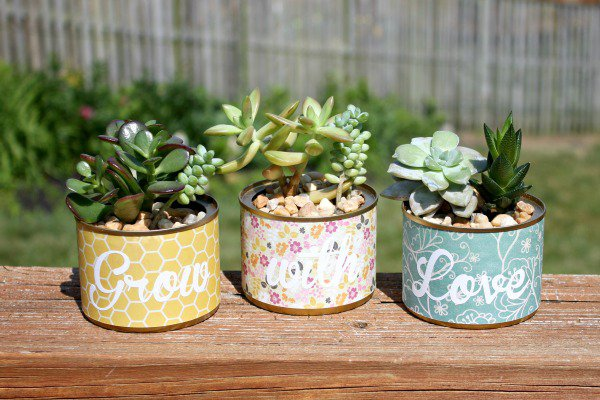 succulent pot plants