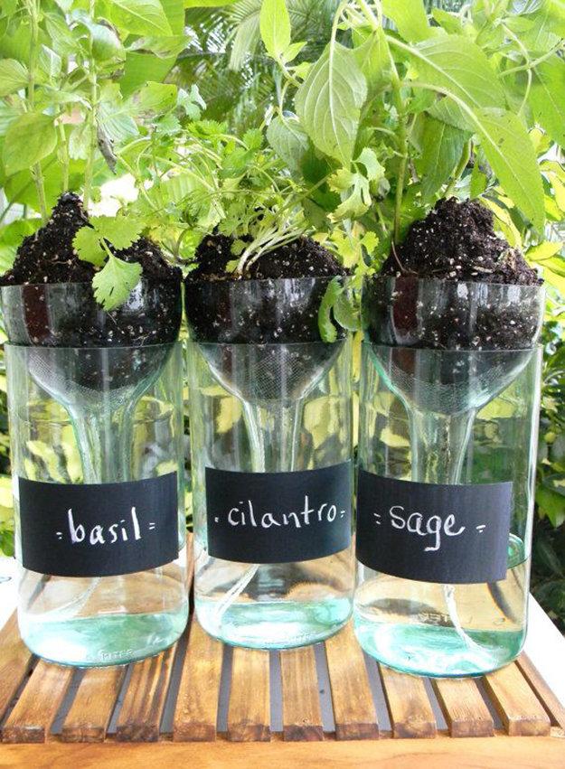 keep your plants fresh