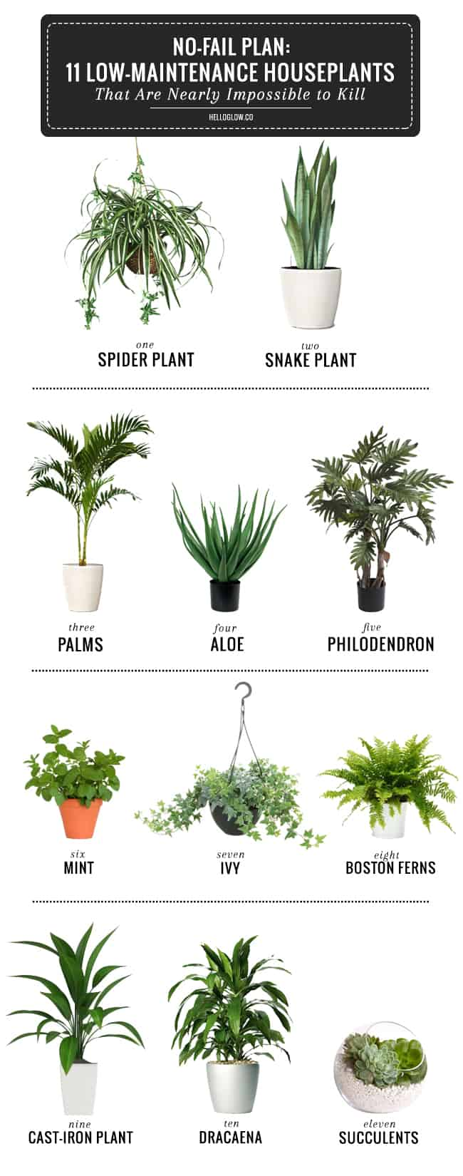 Adding Greens - 11 Office Plants You Won't Kill