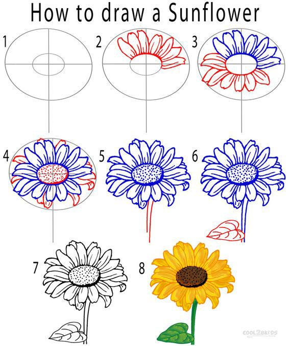 Learn how to simply draw a sunflower