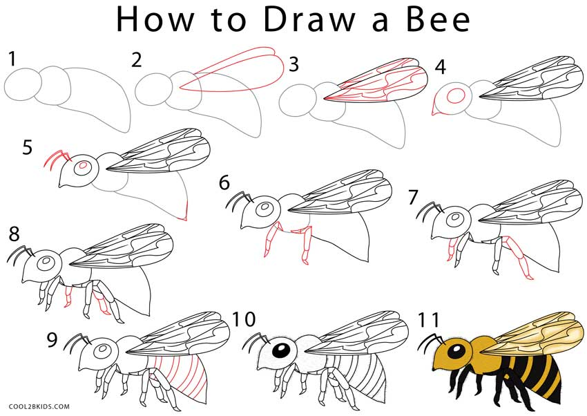 Learn how to draw a bee