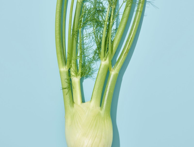 fennel on blue background