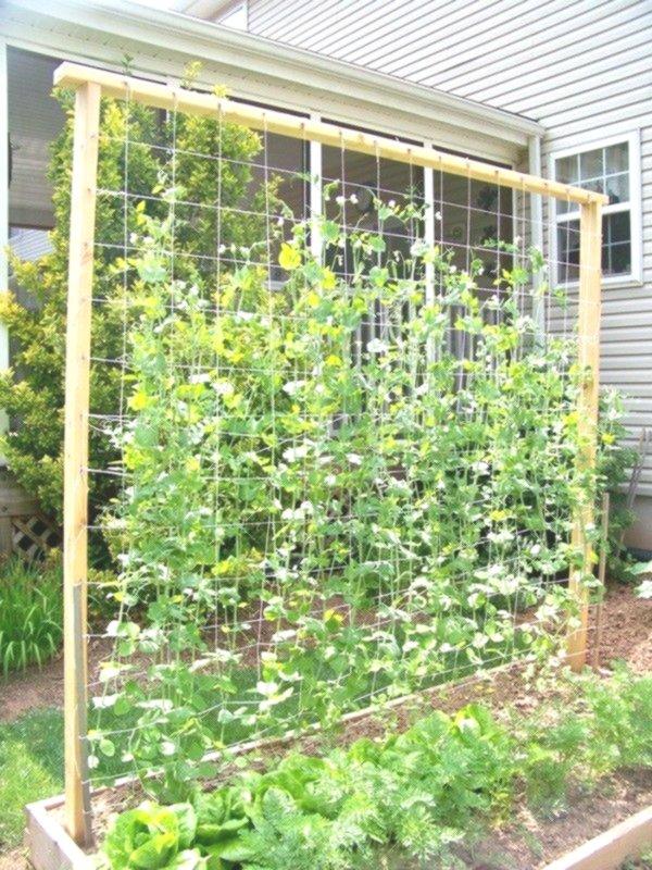 green beans wall