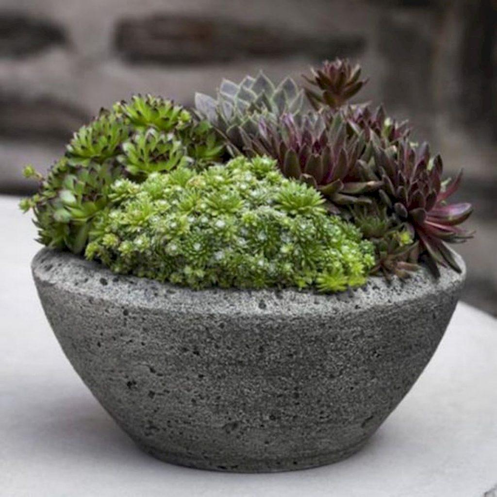 A miniature garden from concrete