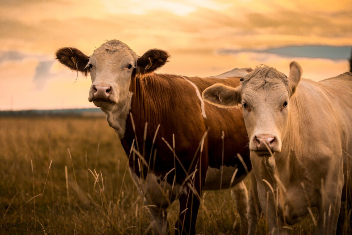 9 Tips to Make Sure Your Livestock Stay Healthy