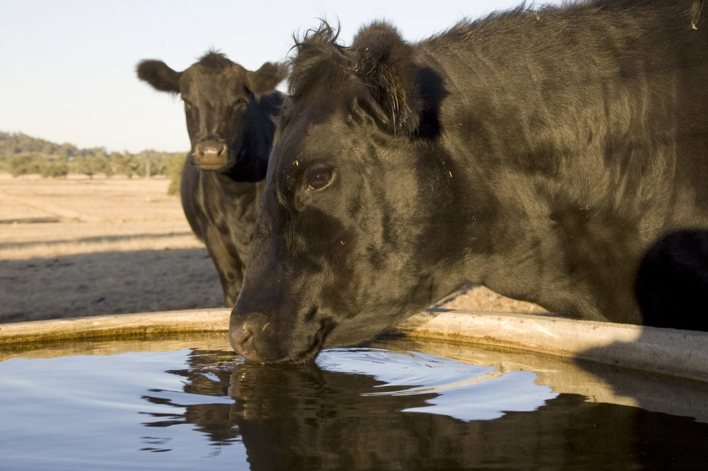 9 Tips to Make Sure Your Livestock Stay Healthy 2 1024x681 - 9 Tips to Make Sure Your Livestock Stay Healthy
