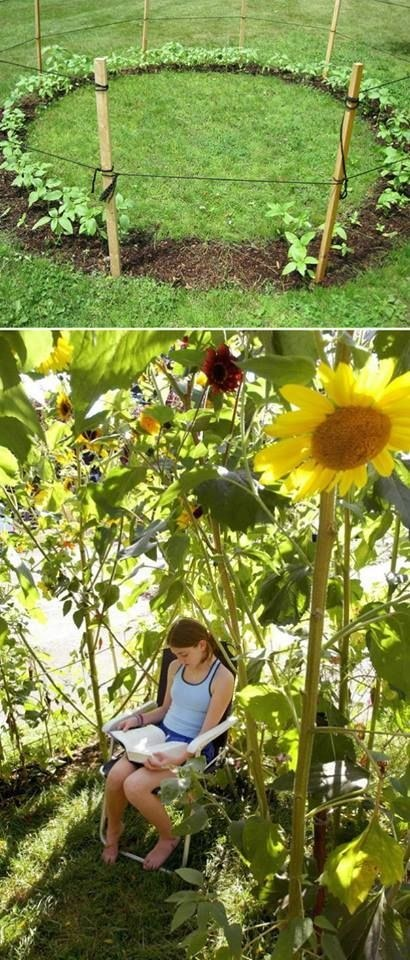 sunflower forts
