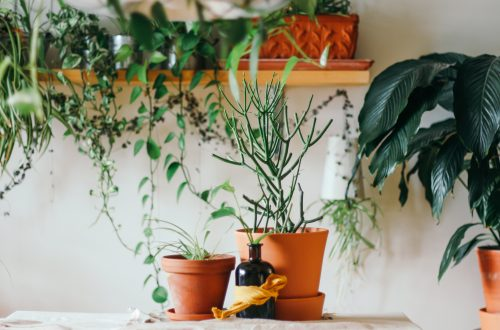 Here in this article, we are going to talk about how you can embrace a biophilic interior décor.