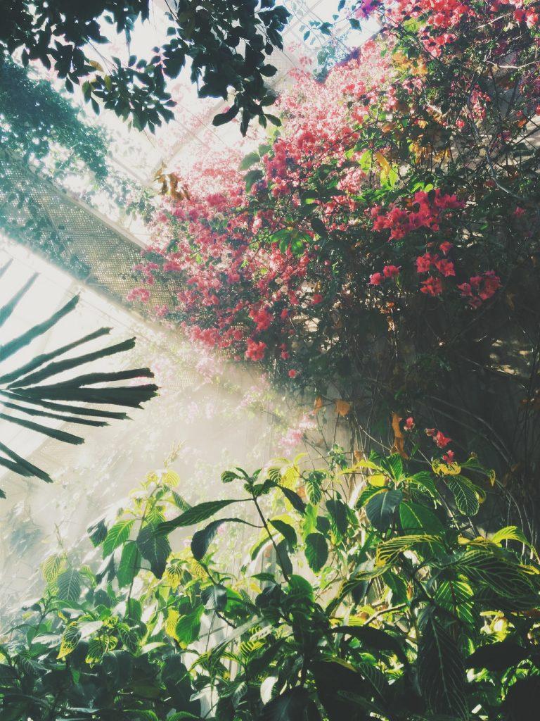 Grow a Luscious Garden