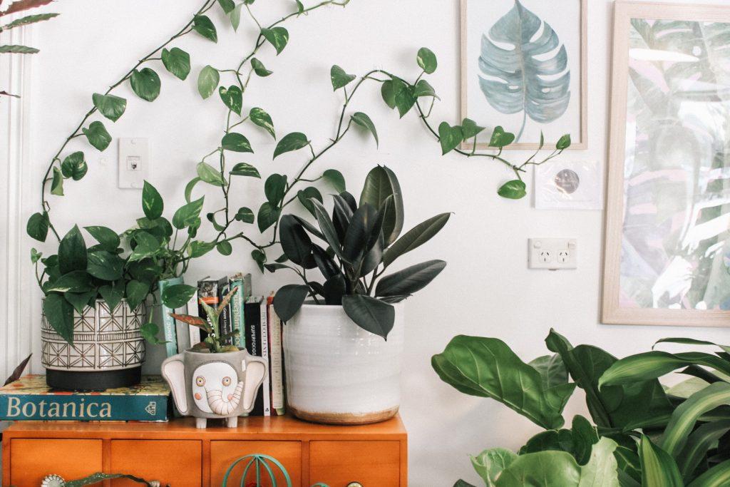 Incorporate indoor plants