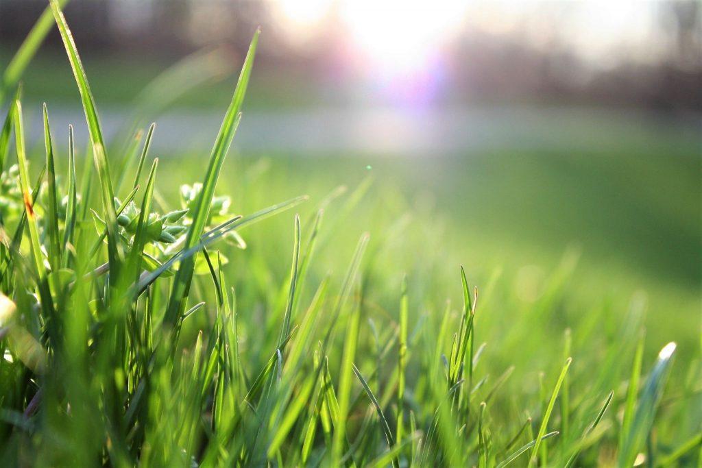 Artificial vs Natural grass installation