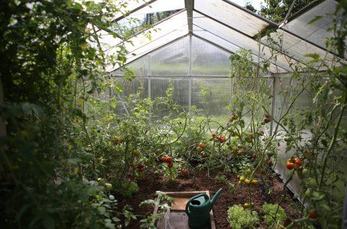 budget garden ideas